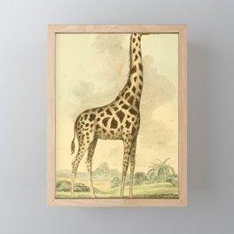 Vintage Print - Bullock's London Museum & Pantherion (1812) - Cameleopard / Giraffe Framed Mini Art Print