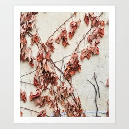 Dead Vine Climbing a Stucco Wall Art Print
