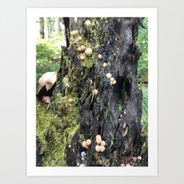 Trail of Puffballs Art Print