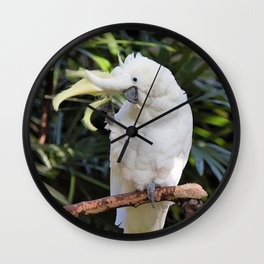Sulfur-Crested Cockatoo Salutes the Photographer Wall Clock