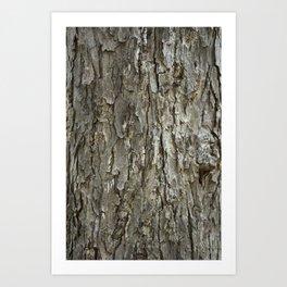 Tree Bark Texture Art Print