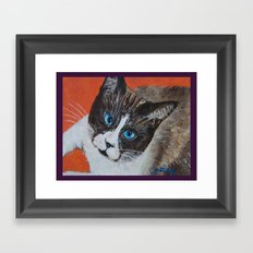Rastus the Snowshoe cat Framed Art Print