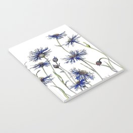 Blue Cornflowers, Illustration Notebook