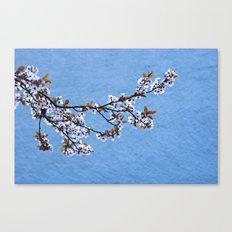 Blossom on Blue Canvas Print