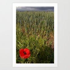 Unripe Wheat Field and Poppy Art Print