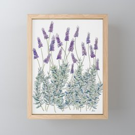 Lavender, Illustration Framed Mini Art Print