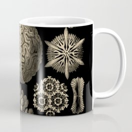 """Hexacoralla"" from ""Art Forms of Nature"" by Ernst Haeckel Coffee Mug"