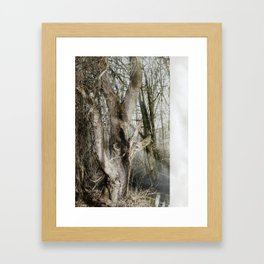 The Bewitched Tree Framed Art Print