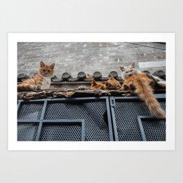 A Bunch of Cats Art Print