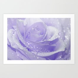 Rose with Drops 085 Art Print