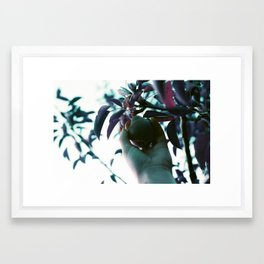 Backyard Pear Framed Art Print