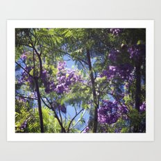 Jacaranda Tree II Art Print