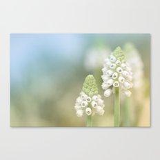 Dreamy Grape Hyacinth.... Canvas Print