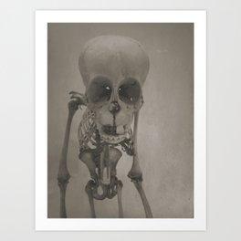Primate Skull Study Art Print