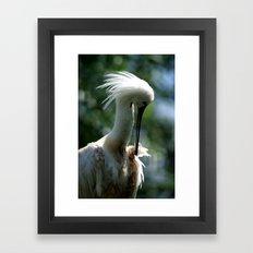 Spoonbill Framed Art Print