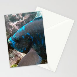 Midnight Blue Parrot Fish Stationery Cards