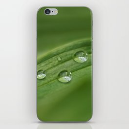 Water drops on green grass iPhone Skin