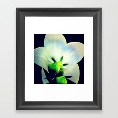 FLOWER 043 Framed Art Print