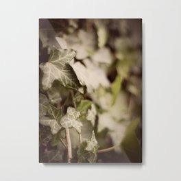 Trailing Ivy #1 Metal Print