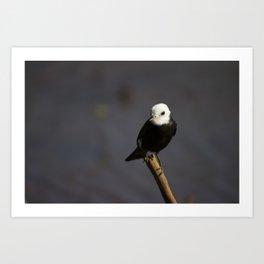 Birds from Pantanal Freirinha Art Print