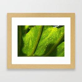 Spotted Leaf Framed Art Print