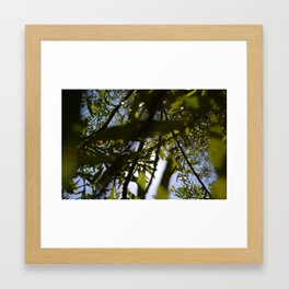 Sun through Grass Framed Art Print