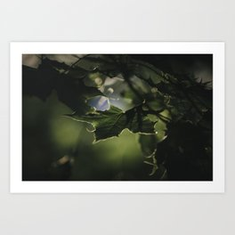 Green Leaves Dark Background Nature CloseUp Photograph Art Print