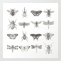 insects Art Prints featuring Insects by Elizabeth Clowes Illustration