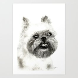 Brussels Griffon Drawing Art Print