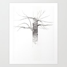 Sweet Birch Art Print