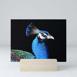 Romeo the Peacock Mini Art Print
