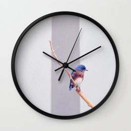 Western Bluebird Wall Clock