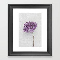 Purple Hydrangea Framed Art Print
