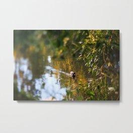 Duck pond Metal Print