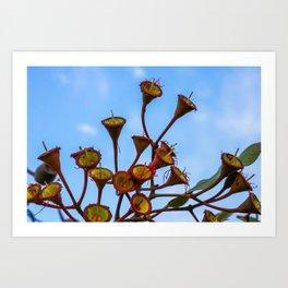 Flowering Gum 3. No Flower. Australia. Art Print