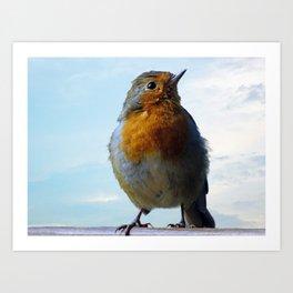 Fluffy Robin Redbreast Art Print