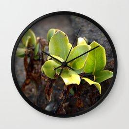Mangrove Shoot Wall Clock