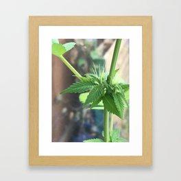 Cannabis Cluster Framed Art Print