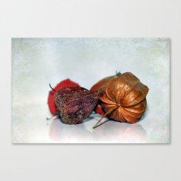 Physalis Part VIII. Canvas Print
