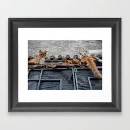 A Bunch of Cats Framed Art Print