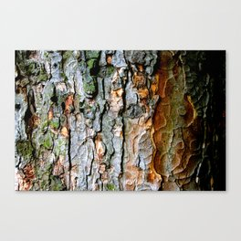 Signs of life Part III. Canvas Print