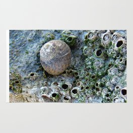 Nacre rock with sea snail Rug