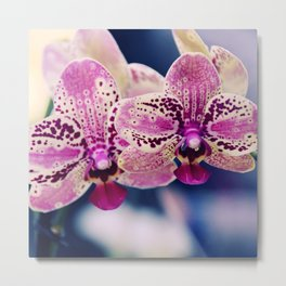 Close up Orchid #10 Metal Print