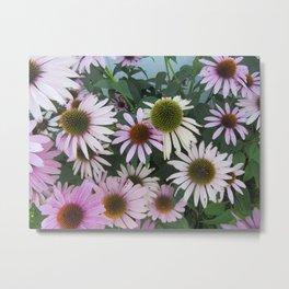 Echinacea Metal Print