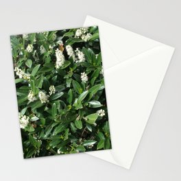 green/white Stationery Cards