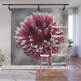 Macro of Round-Headed Leek Flower Allium Sphaerocephalon Wall Mural