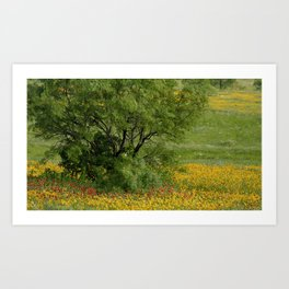 Windblown Palette Art Print