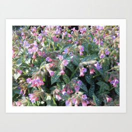 SPRING WILDFLOWERS Art Print