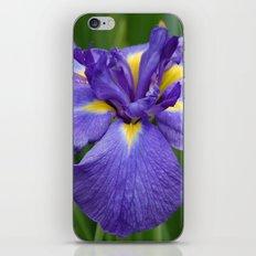 Purple Iris Flower iPhone & iPod Skin