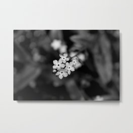Five Forget-Me-Nots B&W Metal Print